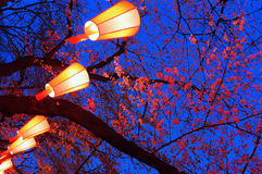 Cherry-Blossom Viewing (O-Hanami) Festival. Beautiful light and colours of Japanese lanterns and cherry blossoms in Cherry-Blossom Viewing (O-Hanami) Festival at royalty free stock image