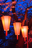 Cherry-Blossom Viewing (O-Hanami) Festival. Beautiful light and colours of Japanese lanterns and cherry blossoms in Cherry-Blossom Viewing (O-Hanami) Festival at stock image