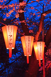 Cherry-Blossom Viewing (O-Hanami) Festival. Tokyo, Japan - March 27, 2004: Beautiful light and colours of Japanese lanterns and cherry blossoms in Cherry-Blossom royalty free stock images