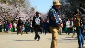 Cherry blossom viewing at Ueno Park stock video footage
