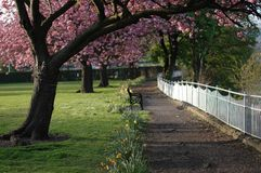 Cherry Blossom Walkway fotografia stock libera da diritti