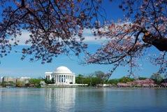 Cherry Blossom, Washington DC Royalty Free Stock Images