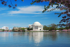 Cherry Blossom in Washington DC Stock Images