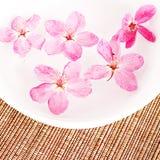 Cherry blossom water Stock Photo