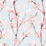 Cherry blossom. Watercolor seamless floral pattern 5. Sakura. Watercolor seamless floral pattern. Hand drawn background Royalty Free Stock Photography
