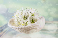 Cherry blossom in a white shell Royalty Free Stock Photo