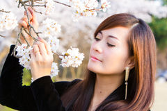 Woman in Cherry Blossom. Cherry Blossom with woman portrait face closeup Stock Photo