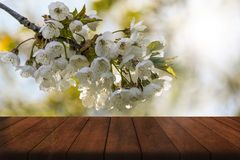 Cherry Blossom And Wooden Table images libres de droits