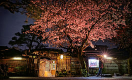 Cherry Blossom y x28; Sakura& x29; Foto de archivo