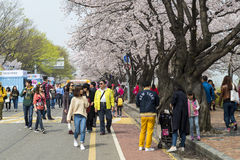 Cherry blossom at Yeouido Yunjung-ro, Seoul. One of the most popular destinations for viewing sakura. stock image