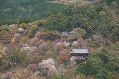 Cherry blossom on Yoshinoyama, Nara, Japan spring landscape Royalty Free Stock Photos