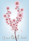 Cherry blossomed branch card Royalty Free Stock Photography