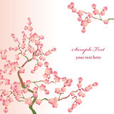 Cherry blossoms. This graphic is cherry blossoms. Illustration Royalty Free Stock Images