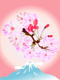 Cherry Blossoms. Illustration of a pink background of bright cherry Vector Illustration
