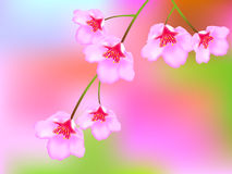Cherry Blossoms. Vivid illustration of the blurred background Sakura Vector Illustration