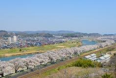 Cherry Blossoms stock foto's