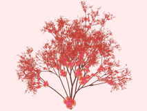 Cherry blossoms. Cherry blossom plant in full bloom Stock Photography