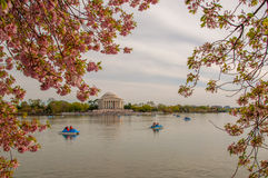 Cherry Blossoms Imágenes de archivo libres de regalías