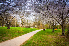 Cherry blossoms along a path at Wilde Lake Park in Columbia, Mar. Yland Stock Photos