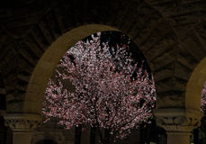 Cherry Blossoms through an Archway Stock Image
