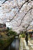 Cherry Blossoms auf Philosoph ` s Weg oder Tetsugaku-kein-Michi, Kyoto, Japan Lizenzfreie Stockfotos