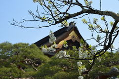 Cherry Blossoms auf Tempelboden Lizenzfreies Stockfoto