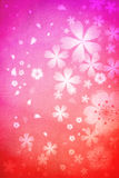 Cherry blossoms background Stock Photography