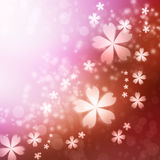 Cherry blossoms background Stock Image
