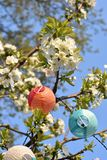 Cherry blossoms with balloon lamps royalty free stock photo
