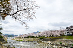 Cherry blossoms on the Bank along Takano River, and mount Hieizan, Kyoto, Japan Royalty Free Stock Photos