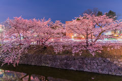 Cherry Blossoms bij nacht in Japan Royalty-vrije Stock Fotografie