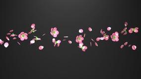 Cherry Blossoms On Black Background royaltyfri illustrationer