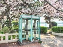 Cherry Blossoms Blooming in Namcheondong, Suyeonggu, Busan, Zuid-Korea, Azië royalty-vrije stock foto