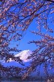 Cherry blossoms in blue sky and Mt. Fuji from Lake Kawaguchi Japan Stock Image
