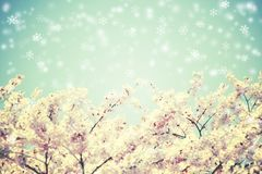 Cherry blossoms and blue sky with snow falling. Vintage flower. Stock Photography