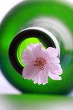 Cherry blossoms and bottle Stock Photography