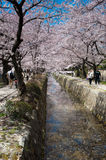 Cherry blossoms bring tourists to Japan Royalty Free Stock Photos