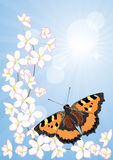 Cherry blossoms and butterflies Stock Photo