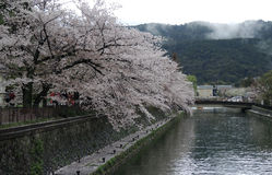 Cherry Blossoms and canal Stock Photography