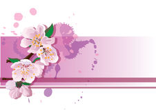 Cherry blossoms card Royalty Free Stock Image