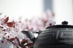 Cherry blossoms with cast iron teapot for Japanese tea lovers Royalty Free Stock Image