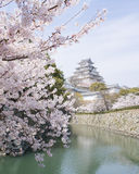 Cherry blossoms and castle in spring, Japan Royalty Free Stock Photo