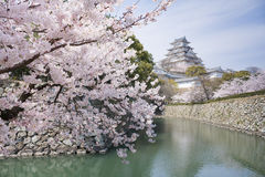 Cherry blossoms and castle in spring, Japan Stock Image