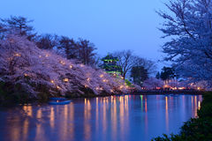Cherry blossoms and Castle in the twilight Stock Images