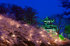 Cherry blossoms and Castle in the twilight Royalty Free Stock Image