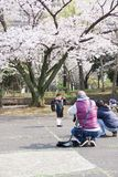 Cherry blossoms 2019 stock images