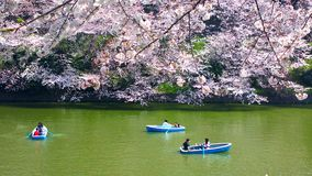 Cherry blossoms at Chidorigafuchi in TOKYO JAPAN Stock Images
