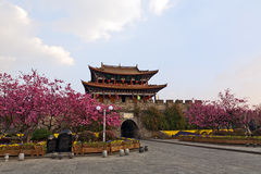 Cherry Blossoms at Chinese Gate Royalty Free Stock Photos