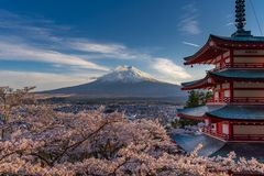 Cherry Blossoms in Japan stock photo