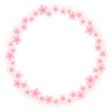 Cherry blossoms. Circle frame of cherry blossom by vector illustration Royalty Free Stock Photos